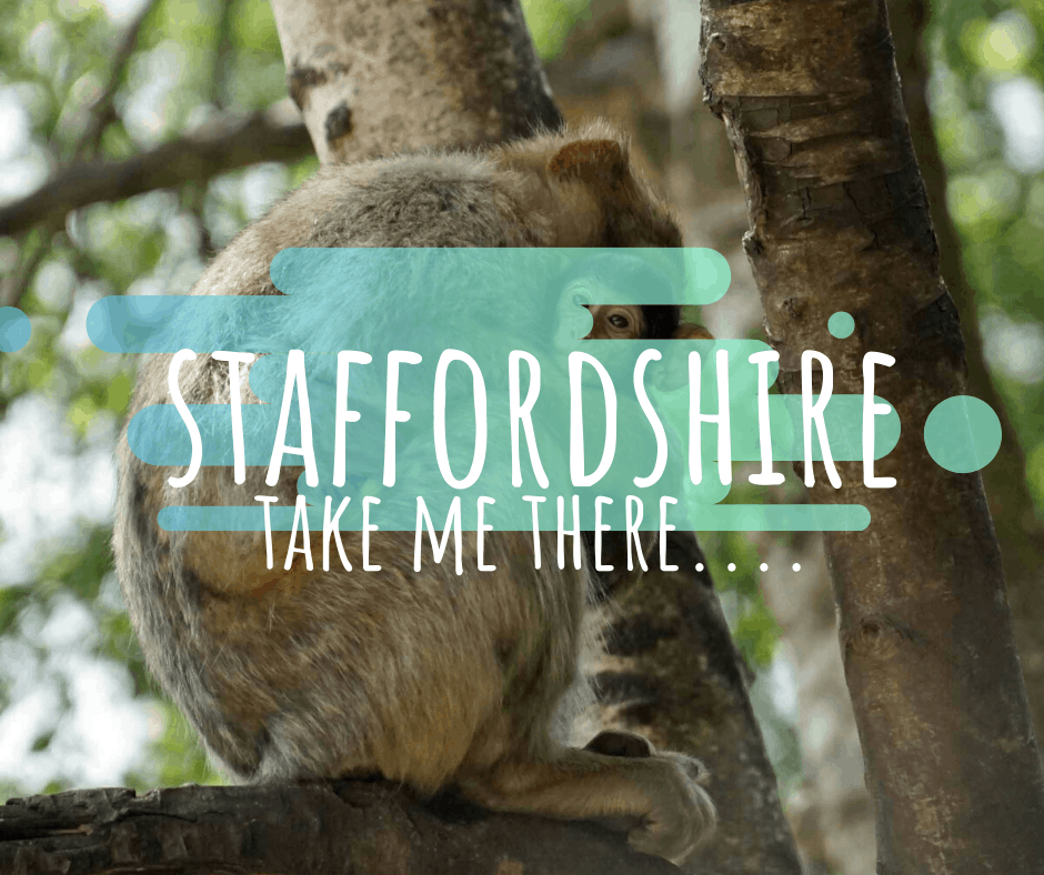 things to do staffordshire