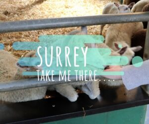 Things to do Surrey