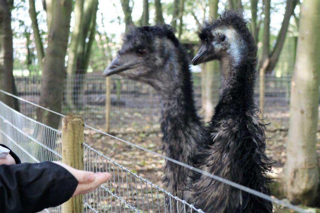 Bridlington Bird of Prey and Animal Park
