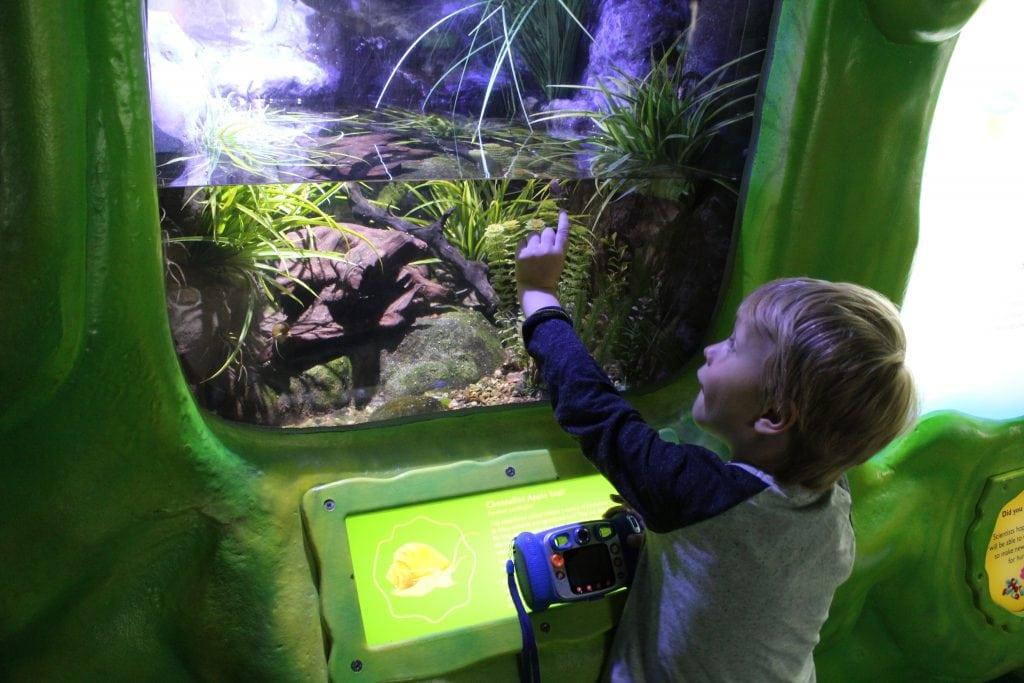 The Deep Hull aquarium
