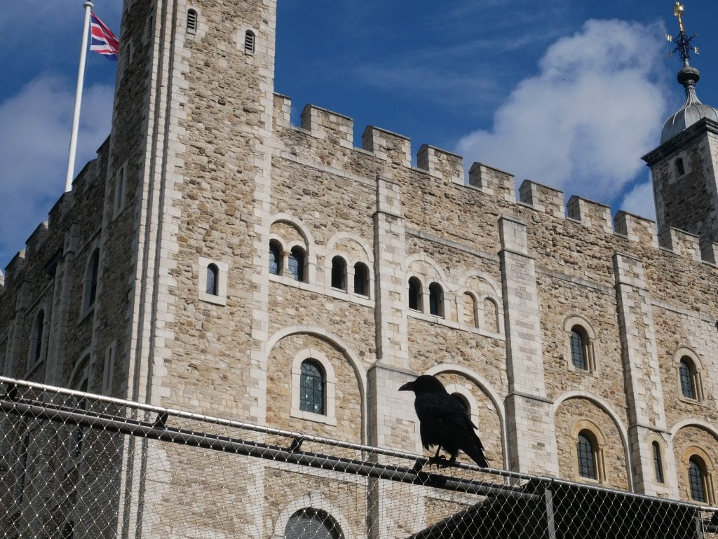 Raven in front of the White Tower