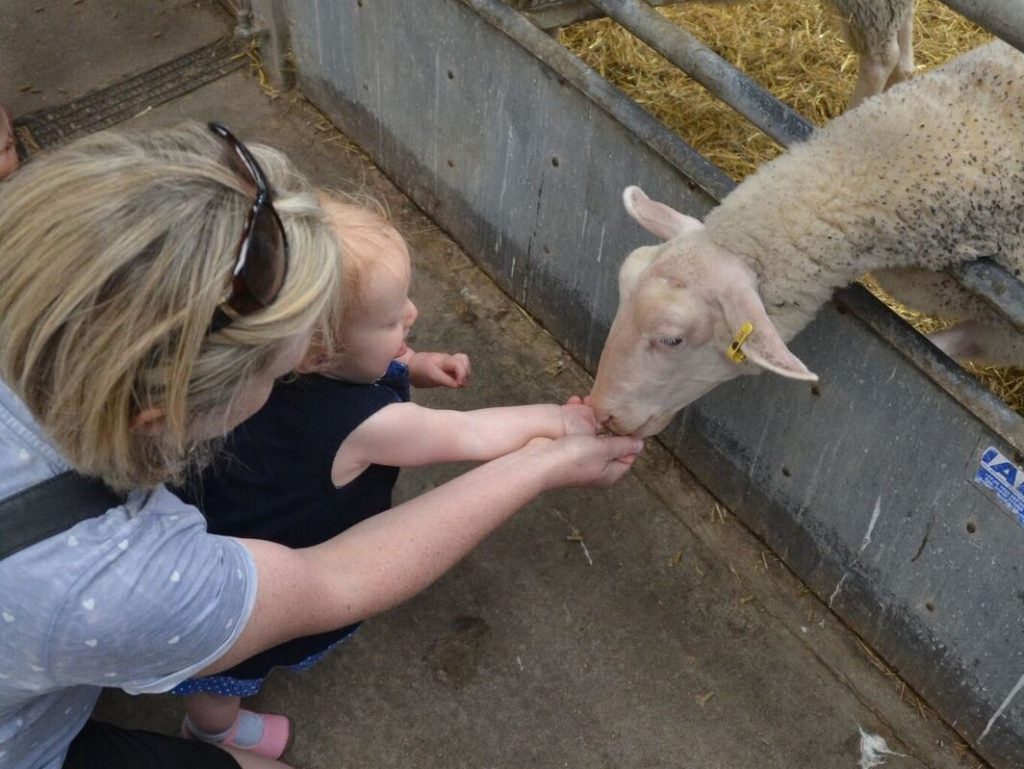 Thumbnail for Mead Open Farm
