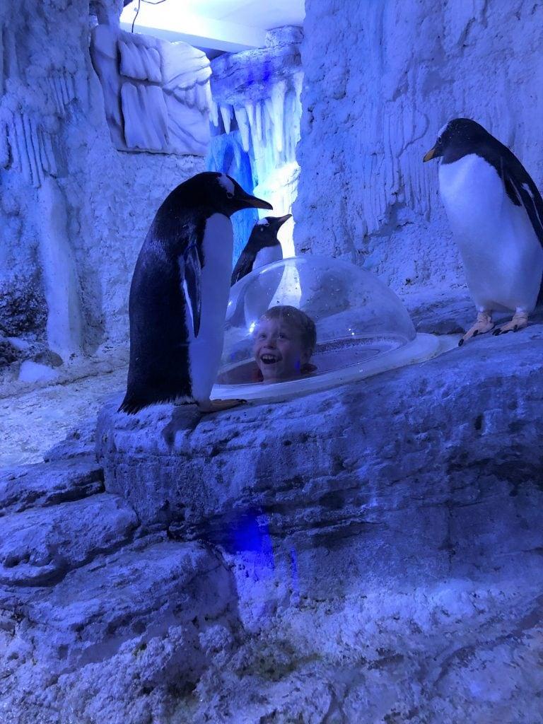 Featured image for SEA LIFE London Aquarium