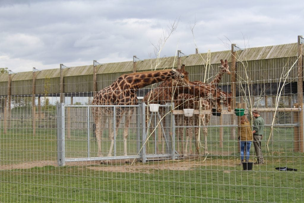 Featured image for Yorkshire Wildlife Park