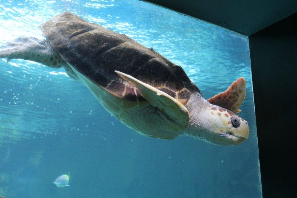 Featured image for Oceanarium