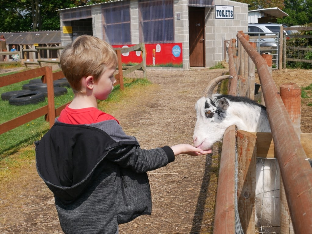 Featured image for Boston Park Farm