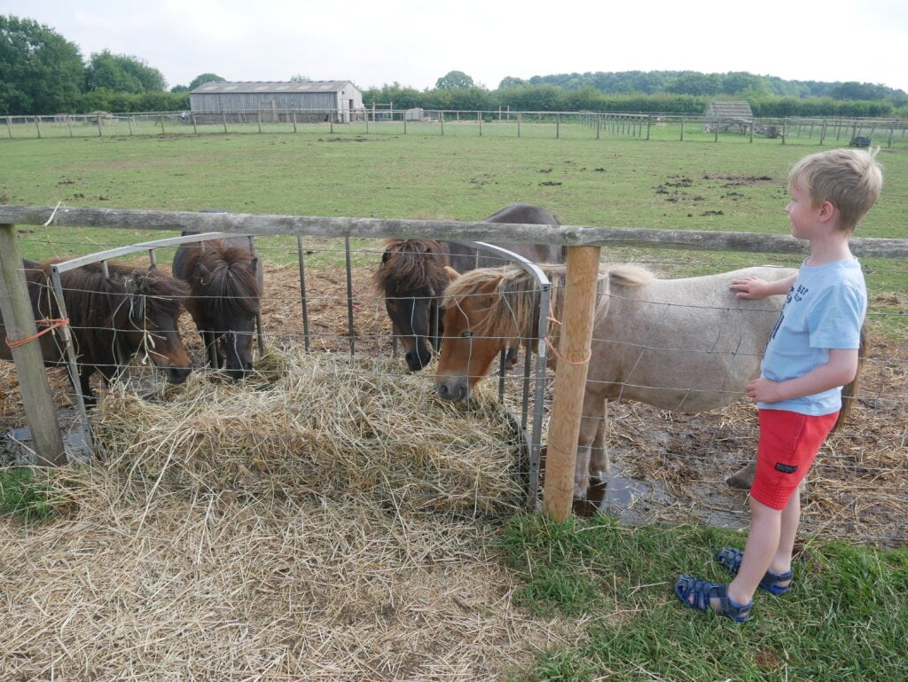 Piglets Adventure Farm