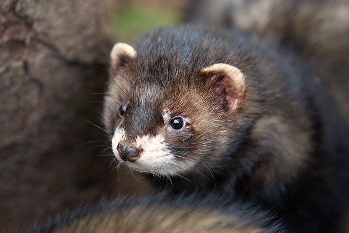 Thumbnail for New Forest Wildlife Park
