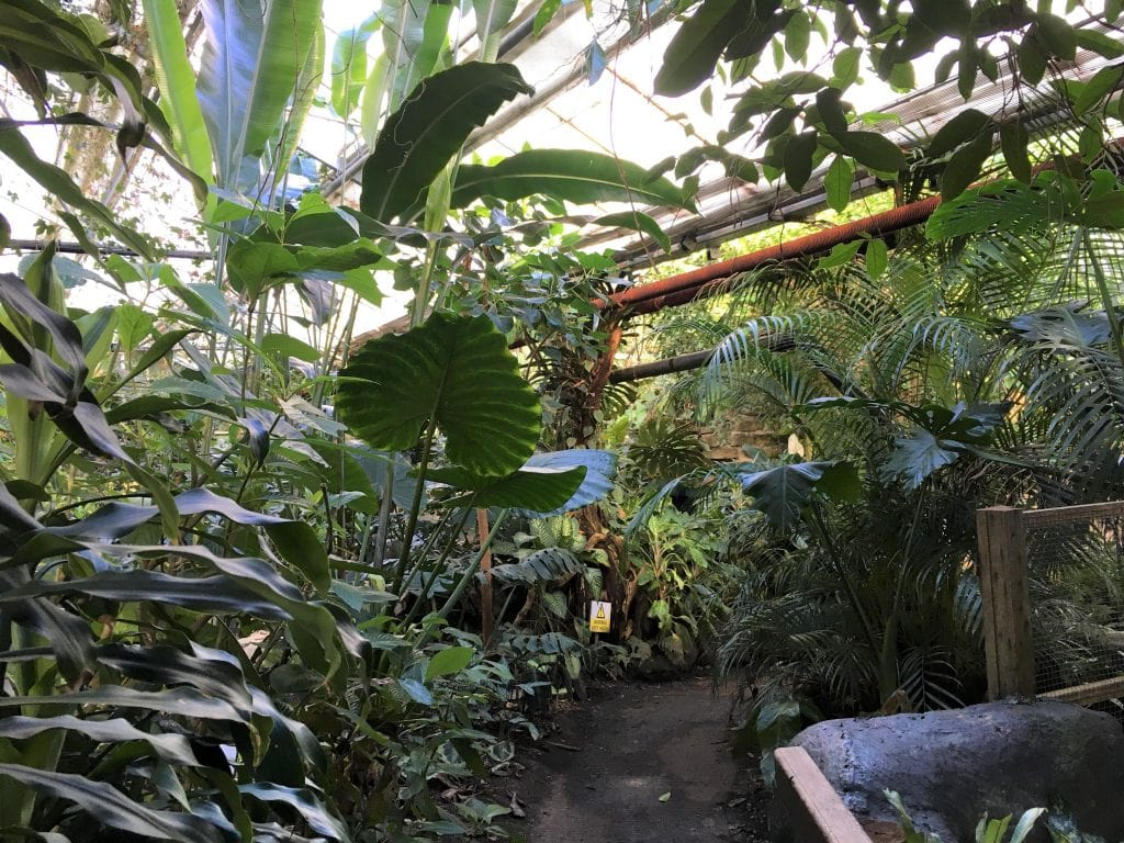 Thumbnail for The Living Rainforest