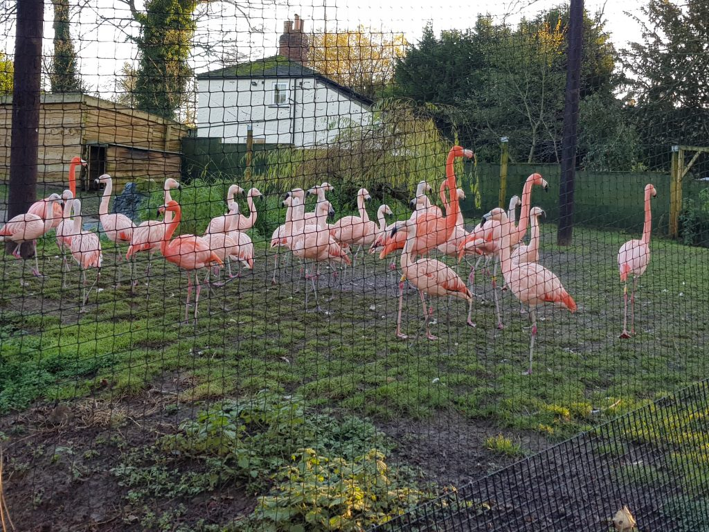 wildlife world lotherton