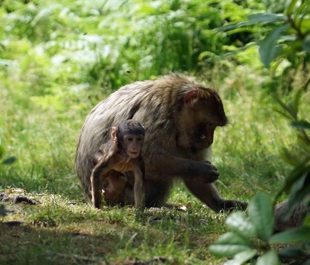 Thumbnail for Trentham Monkey Forest