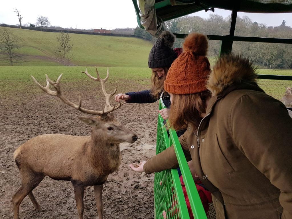 Featured image for Bucklebury Farm Park