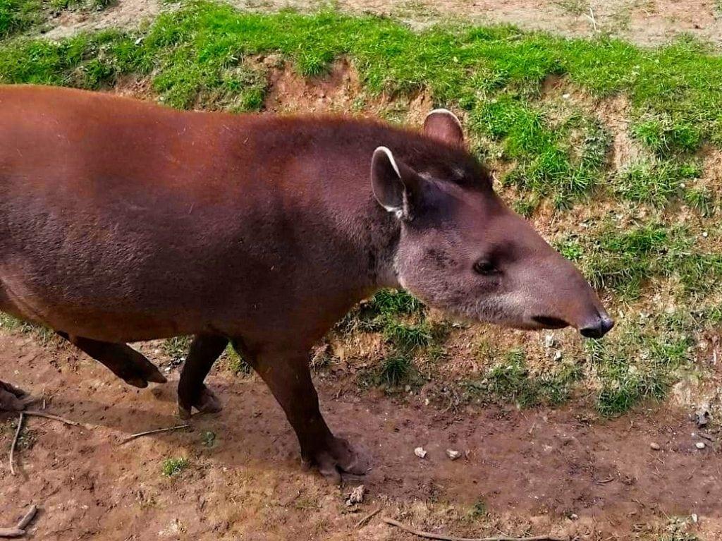 Thumbnail for Linton Zoo