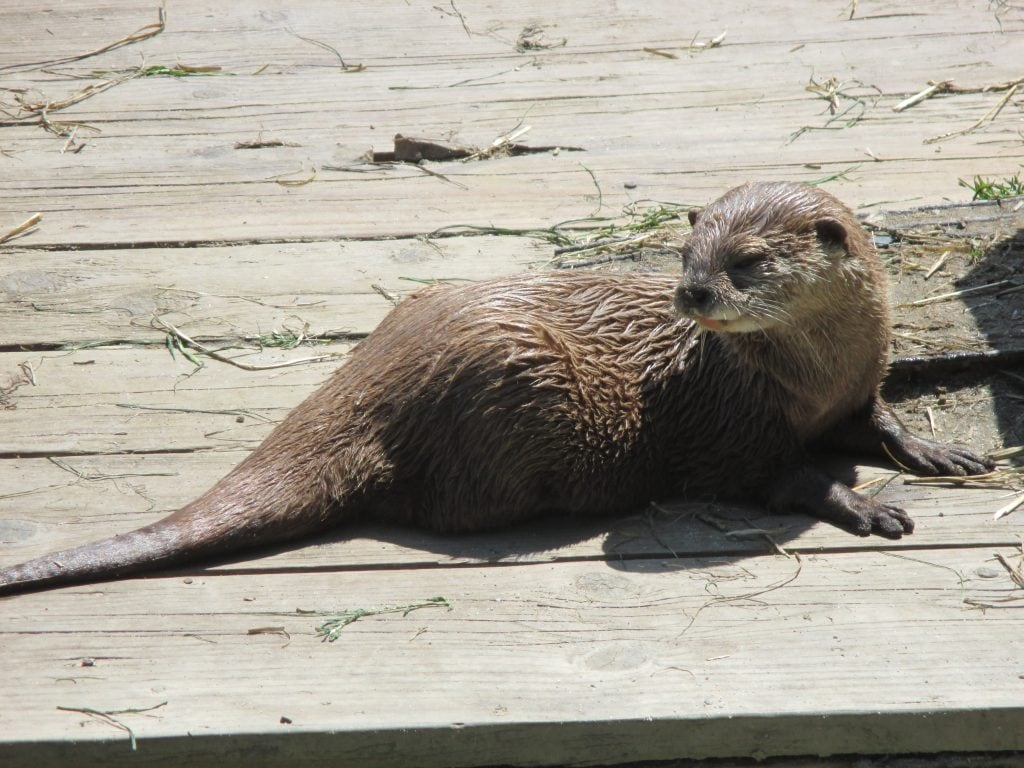 Featured image for Tamar Otter & Wildlife Centre