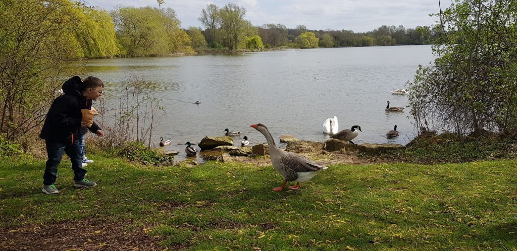 Thumbnail for Ferry Meadows Country Park