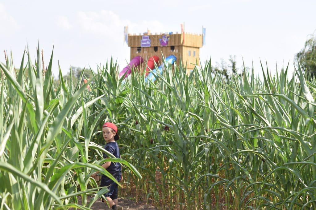 Thumbnail for Skylark Maize Maze