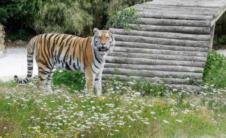 Thumbnail for Howletts Wild Animal Park