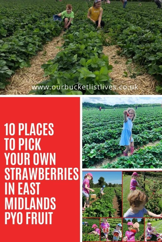 10 Places to Pick Your Own Strawberries in East Midlands PYO Fruit