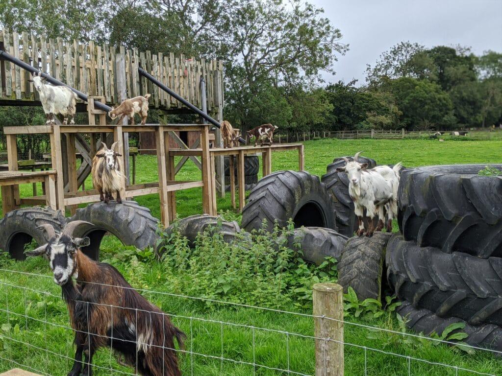 Monk Park Farm