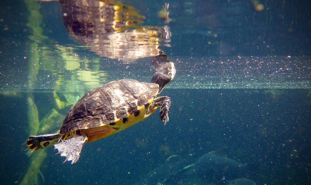 Featured image for Bristol Aquarium