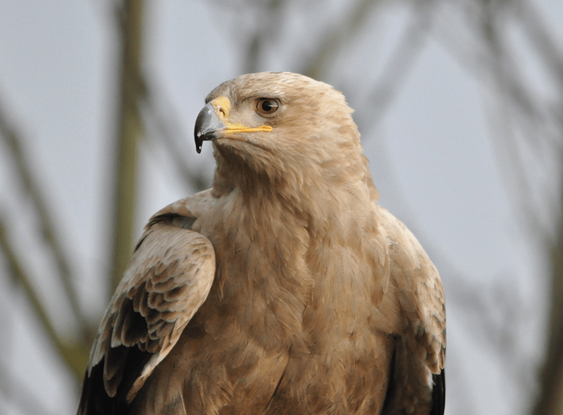 Featured image for Eagle Heights Wildlife Foundation