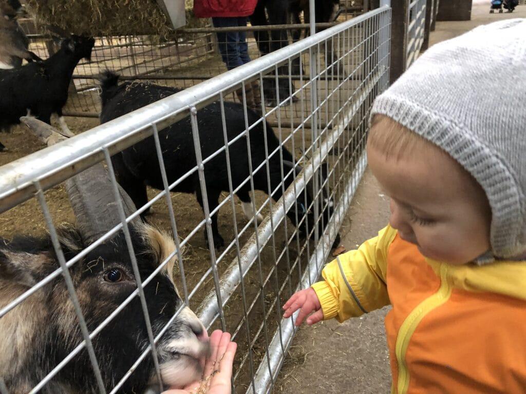 Smithills Open Farm