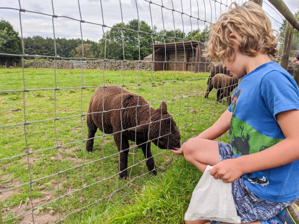 Thumbnail for Matlock Farm Park