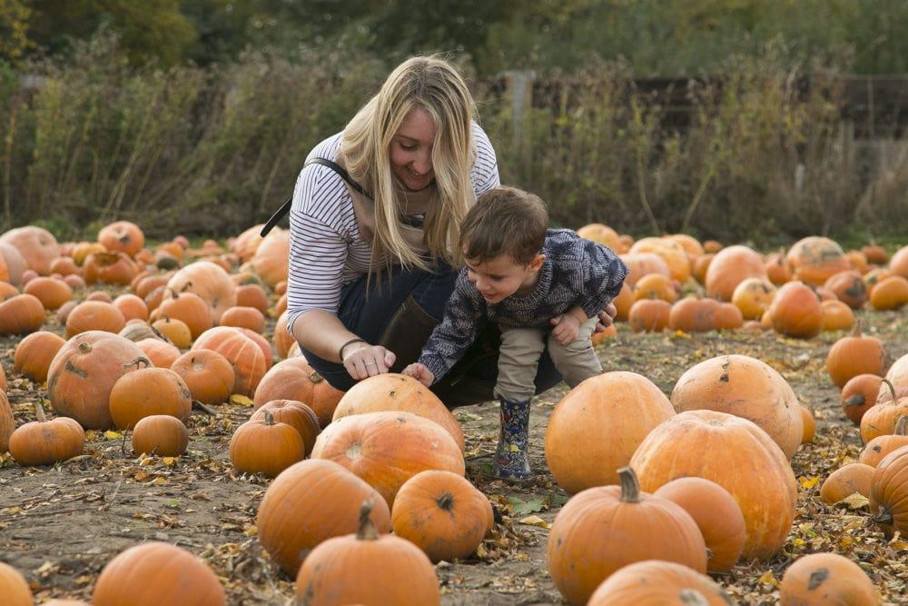 10 + Pumpkin Patches PYO East Midlands 2020