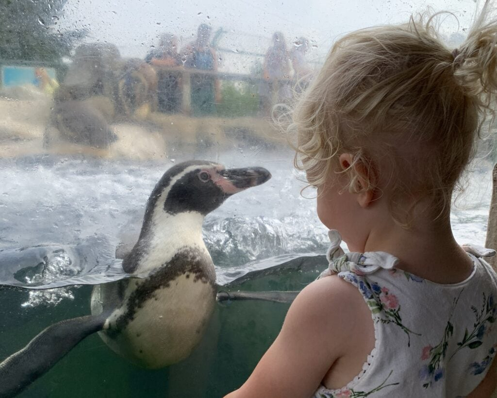 Featured image for SEA LIFE Centre Weymouth
