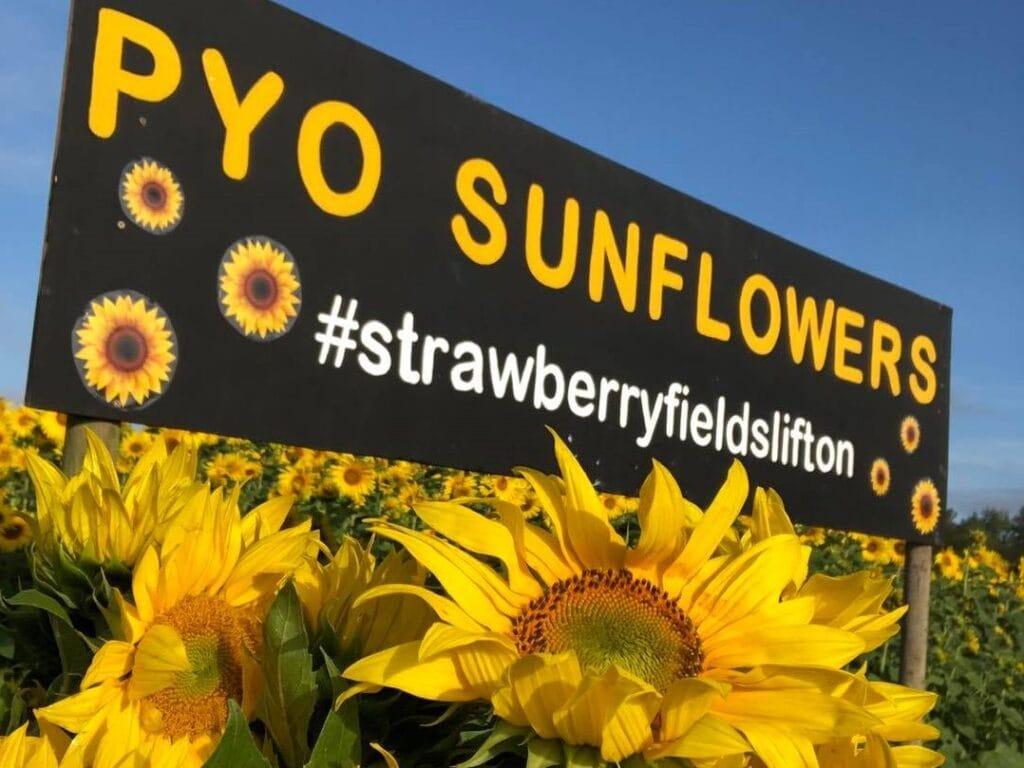 Strawberry Fields Lifton
