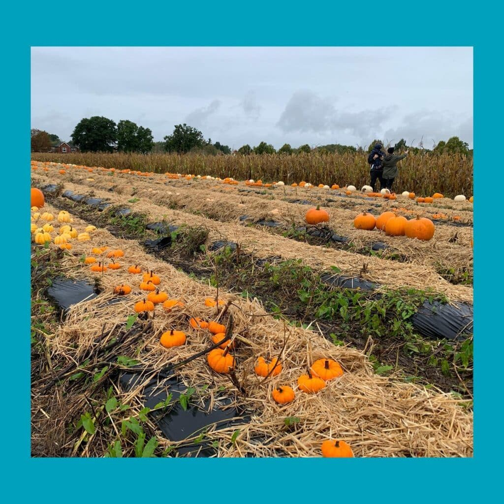 Thumbnail for Crockford Bridge Farm Pick Your Own