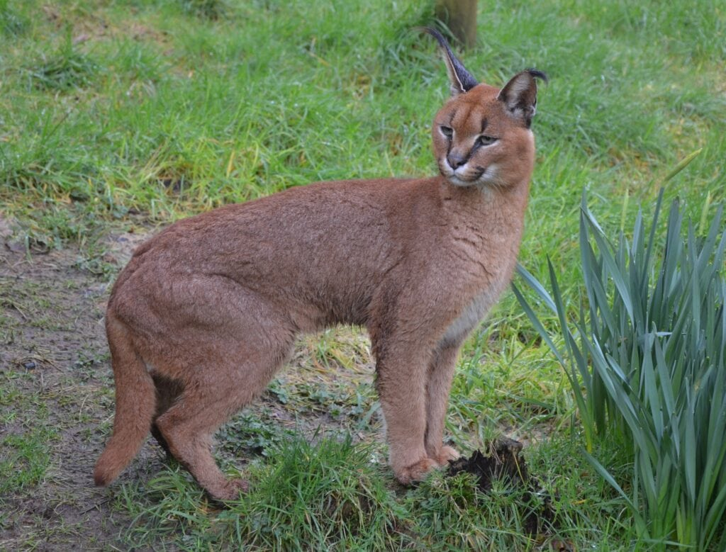 Featured image for Exmoor Zoo