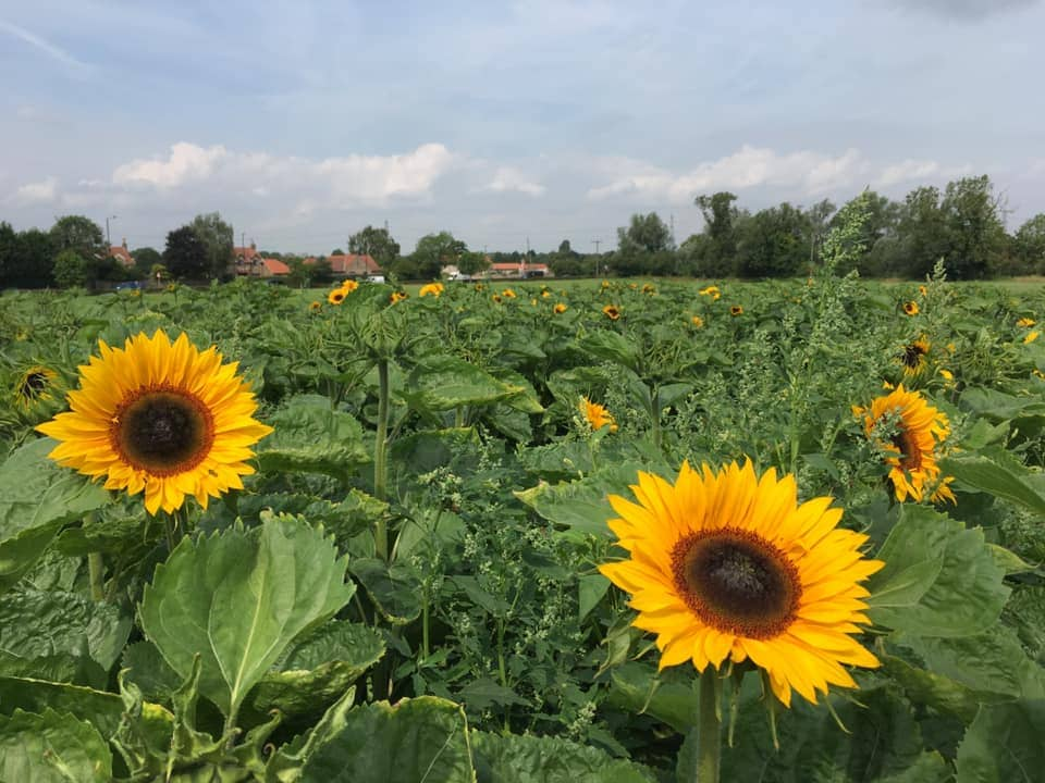 Eastfield Farm, Tickhill