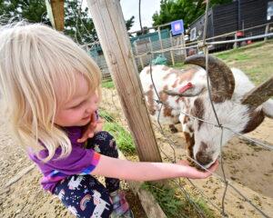 Jimmy's farm and Wildlife Park