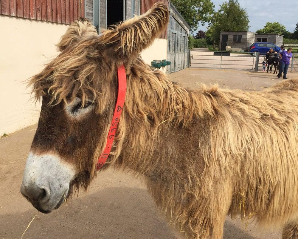 The Donkey Sanctuary Sidmouth