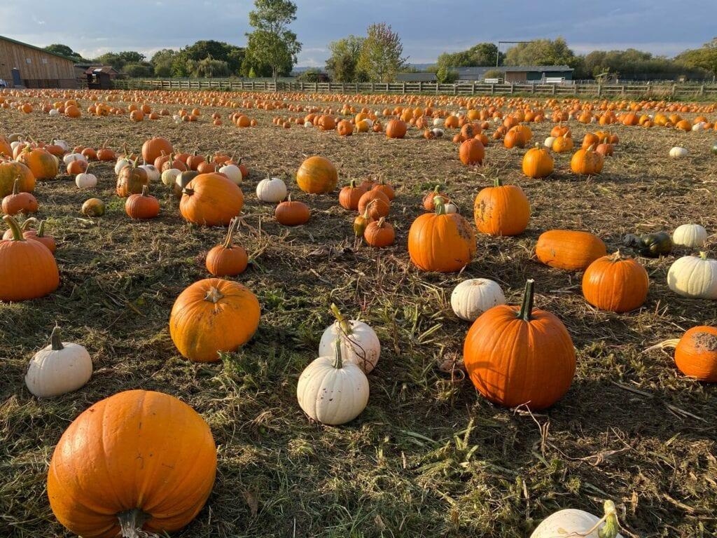 Best Halloween Events Gloucestershire 2020