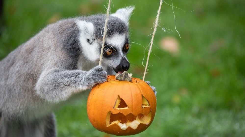 Best Halloween Events East of England 2020 | Things to do | East Anglia +