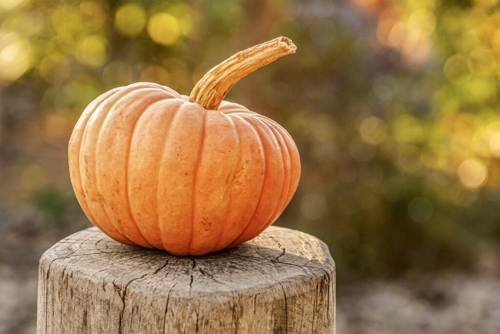 Best Halloween Events South West 2020   Things to do Half-Term