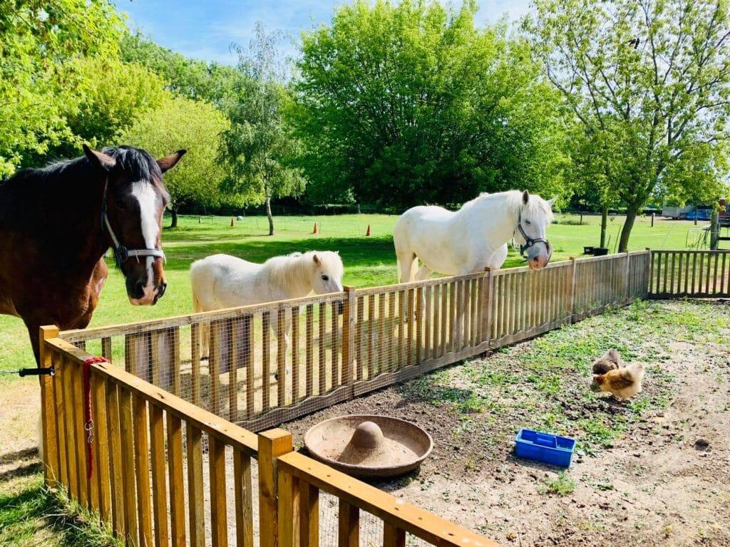 Northcote Heavy Horse Centre