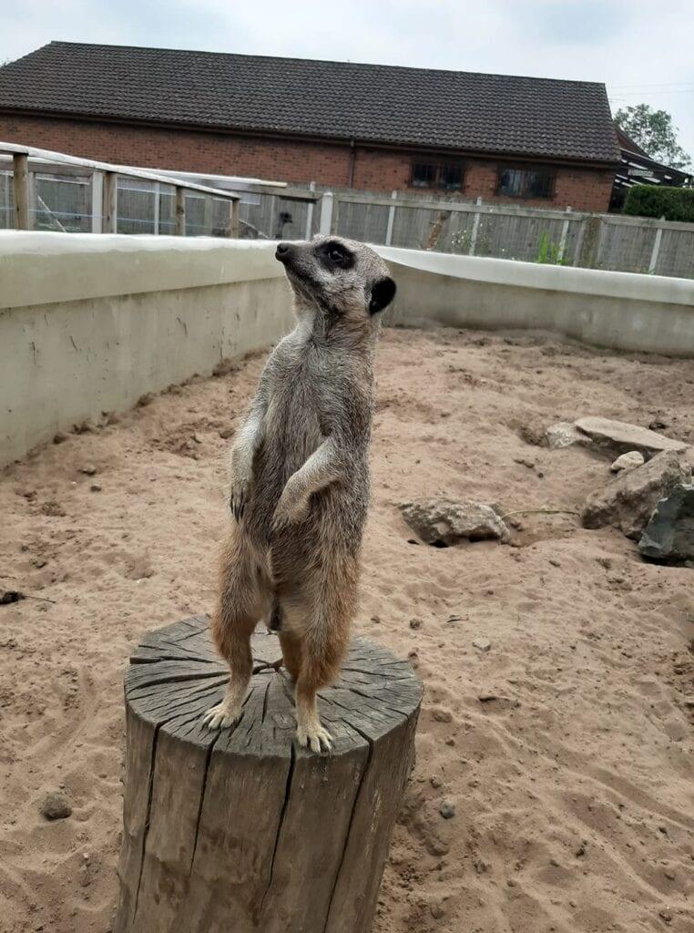 Messingham Zoo