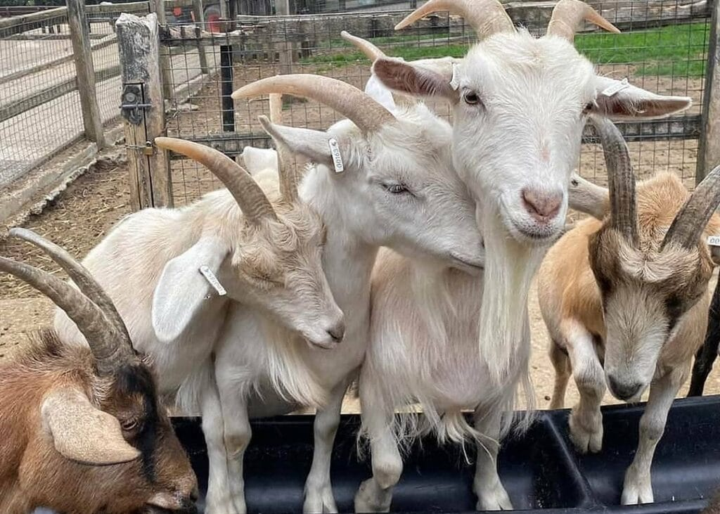 Thumbnail for Woodside Animal Farm