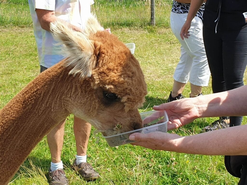 Abbotts View Alpacas