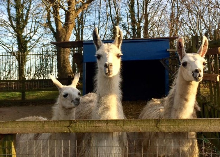 Woodside Animal Farm