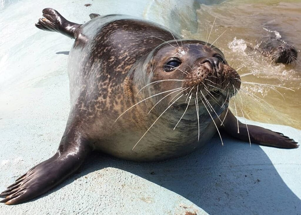 Featured image for The Seal Sanctuary Wildlife Centre