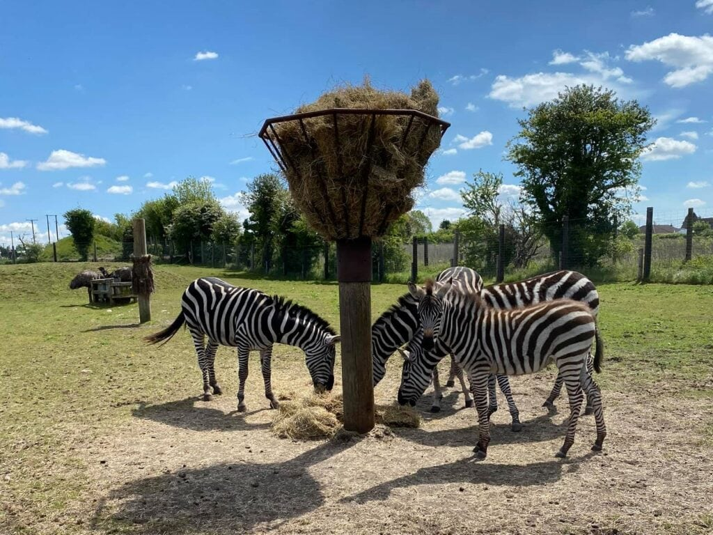 Wolds Wildlife Park