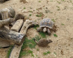 Askham Bryan Wildlife Conservation Park