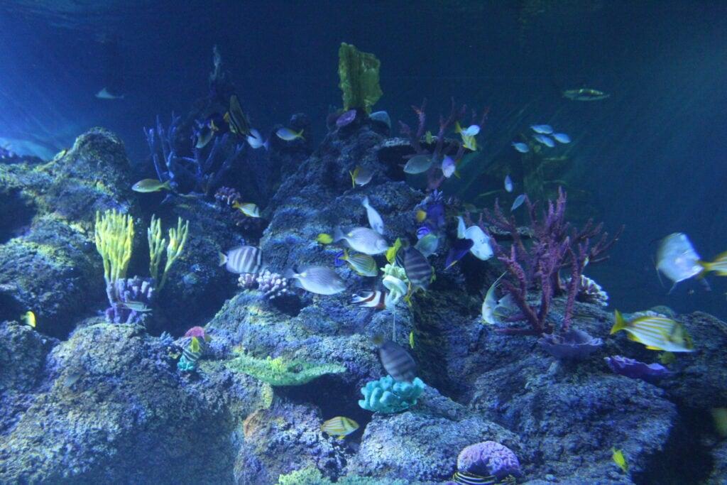 Featured image for Skegness Aquarium