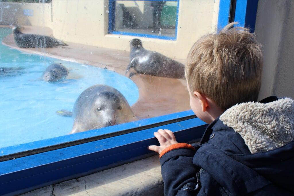 Featured image for Natureland Seal Sanctuary