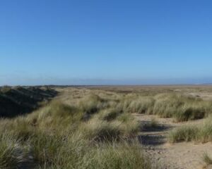 Saltfleetby Theddlethorpe Dunes National Nature Reserve