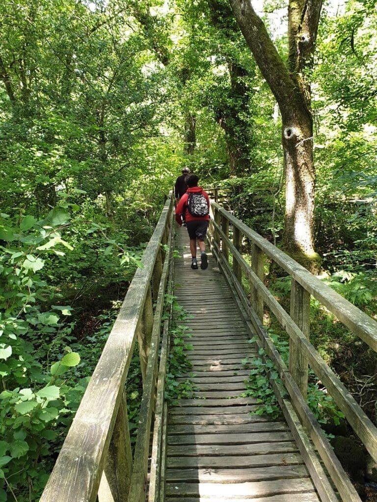 Becky Falls Ancient Woodland Park